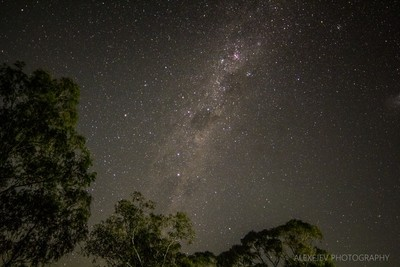Trees and Galaxies