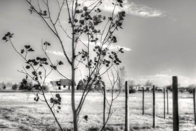 Rural softness