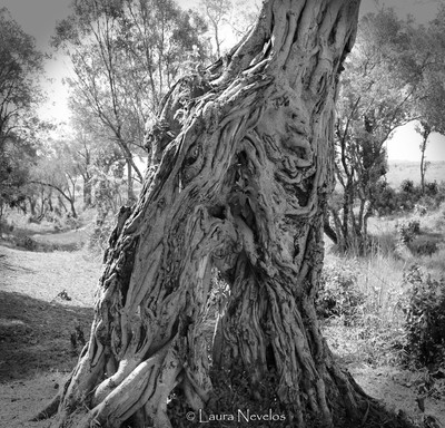Awesome tree in greyscale