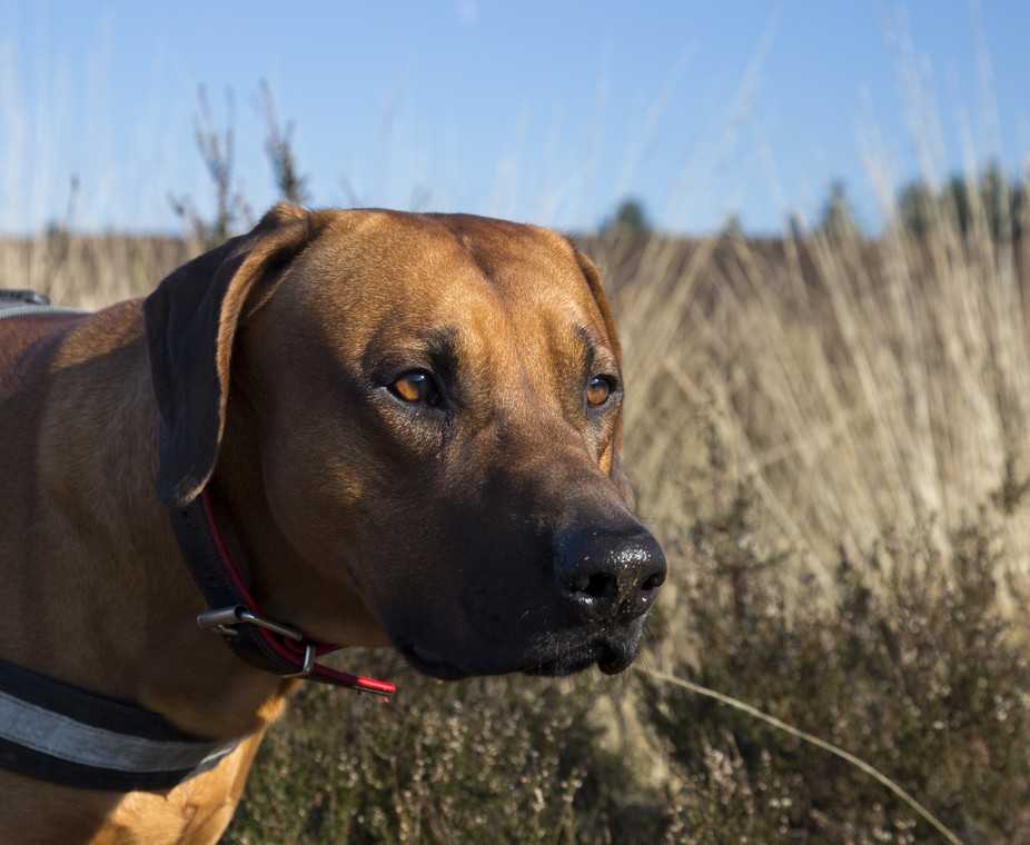 My best friend our big dog Denzell