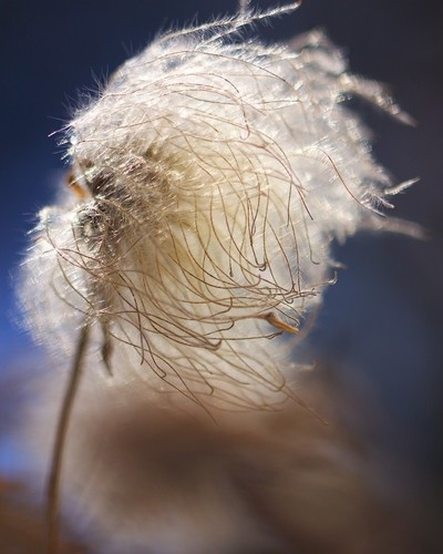 Seedpod in Sunlight - vertical