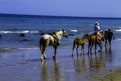 Horse in the Mancora