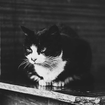 Cat in #black