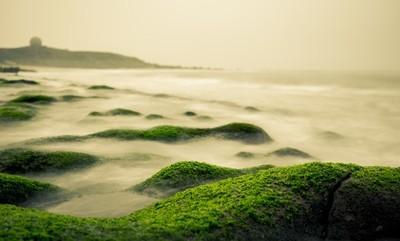 Laomei Algae Bloom
