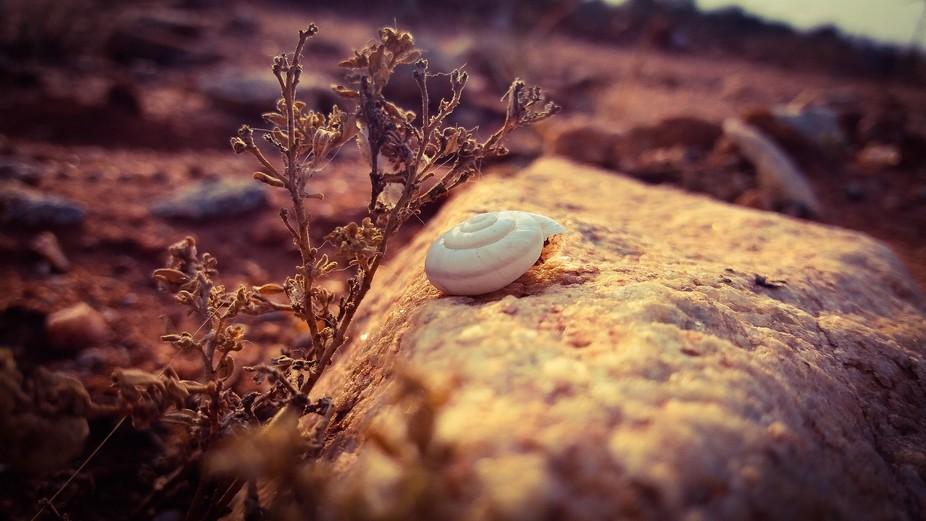 A snail's shell...