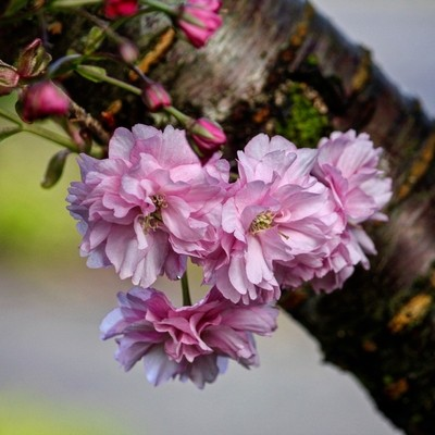 Blooms on the tree