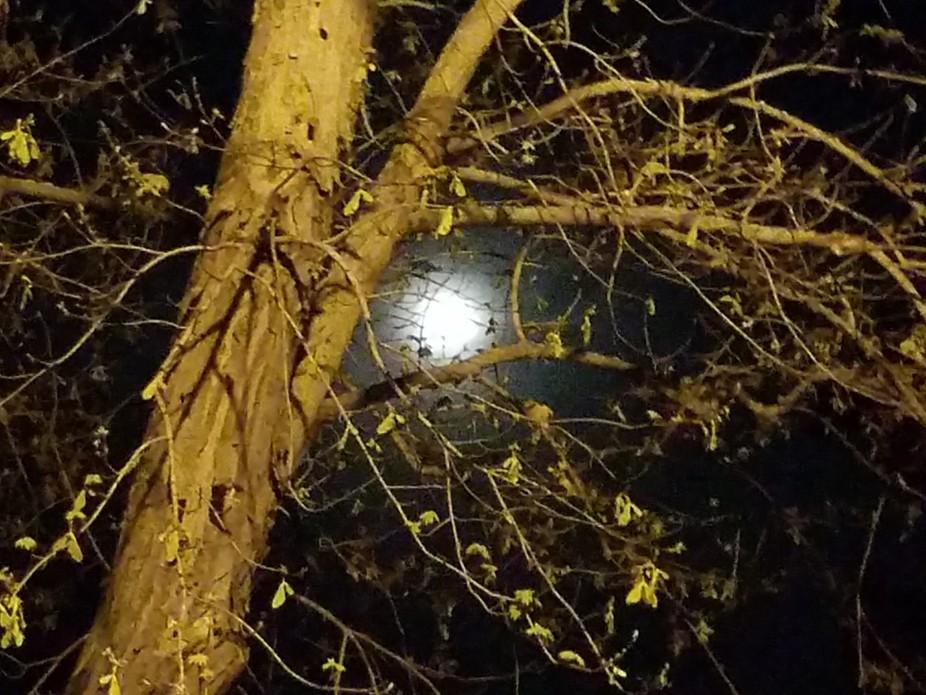 A beautiful full moon peeking thru the tree