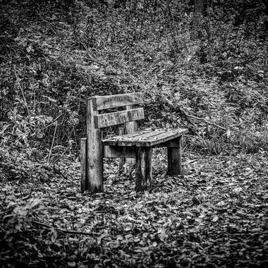 The bench in the forest