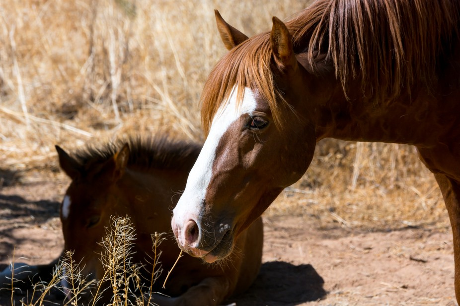 A Mare and Colt