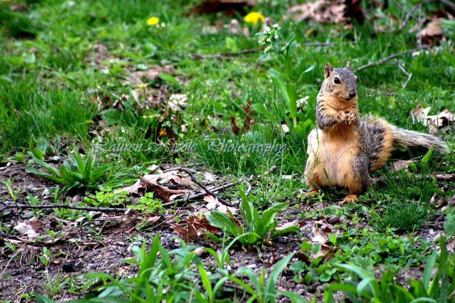 Squirrel enjoying it's lunch on a nice Spring Day