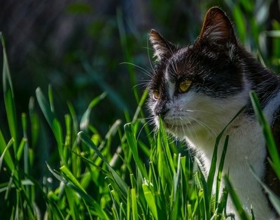 Cat and spring