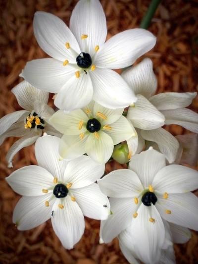White blooms...