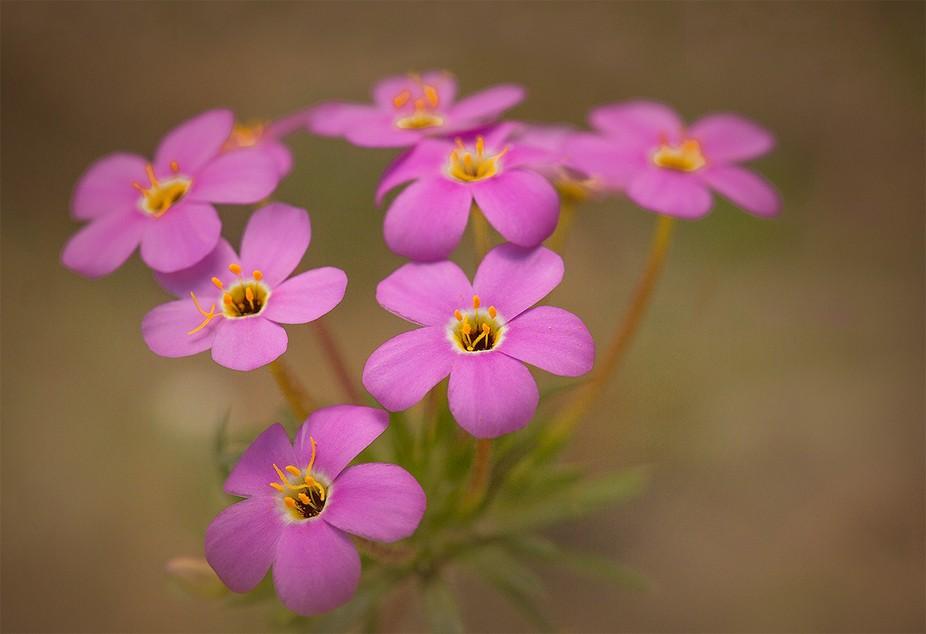 Wildflower blooming in Northern California