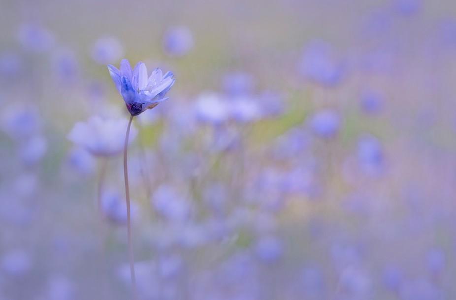 Wildflower in Northern California
