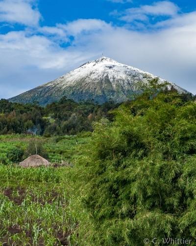 Bamboo, Sorghum & Snow