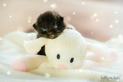 ~Lamb Kitty Cuddles~
