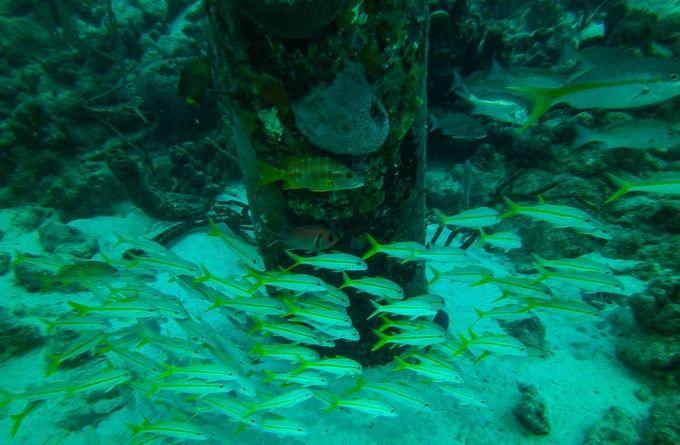 Salt Pier Bonaire, Netherlands Antilles (1 of 1)