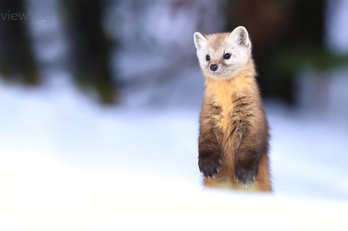 Standing Tall by meganlorenz - Wildlife Photo Contest 2017