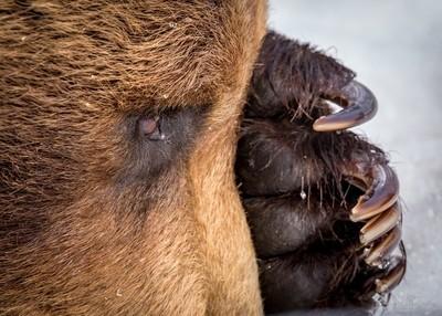 Brown Bear Peek A Boo