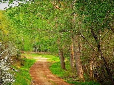 Alfaião -  My paths.