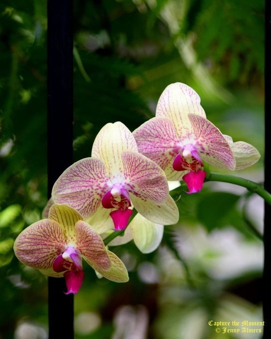 Orchids in a Row