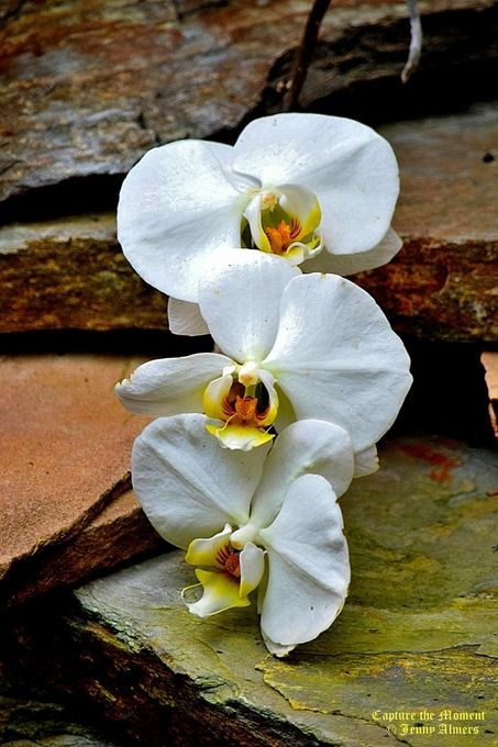 White Orchids Trailing Down Stepping Stones