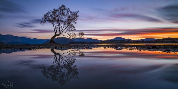 Wanaka Tree by corymarshall - A Lonely Tree Photo Contest