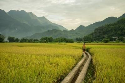 Rice fields in Mai Chau Valley, Vietnam