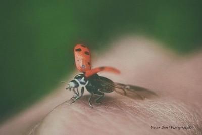 Jus a Lady bug Kinda Day...