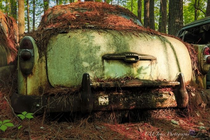 Went to Old Car City in White, GA. This place is amazing. 36 acres of old cars in the woods. 6 miles of trails to wonder thru. I couldn't do it in 1 visit. I will return.