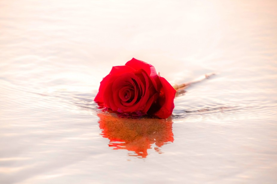 Ashes flowing to the ocean with the final rose for goodbye