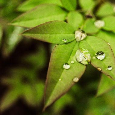 vivid droplets