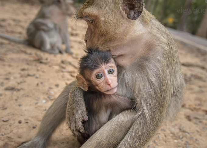 LOVE by GigiJim08 - Monkeys And Apes Photo Contest