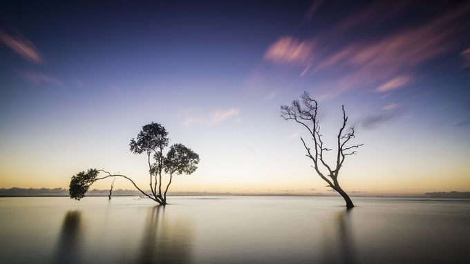 Morning Light 7 by DanMac - Tree Silhouettes Photo Contest
