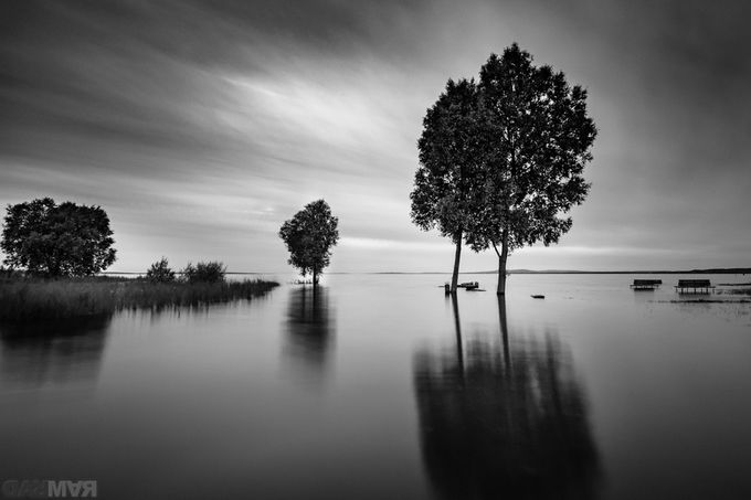2016_DarMar_monochrome sunset by DarMarWorld - Tree Silhouettes Photo Contest