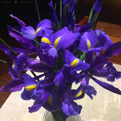 Gorgeous irises from a roadside stall on our outing today #iris #irisesofinstagram #colourpop #flowersofinstagram #discovertasmania #tasmaniagram #hobartandbeyond #instatassie #tassiepics #tassie #hobart #southerntasmania  #tassiestyle #Hey_ihadtosnapthat