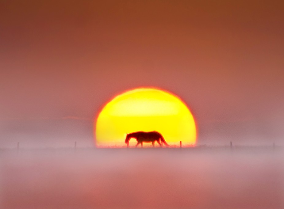 A lone horse walking across the horizon as the sun was rising behind it on a foggy and cold morning