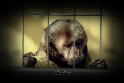 The Prisioner