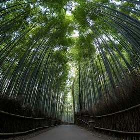 A quiet stroll through the Arashiyama Bamboo Grove in Kyoto, Japan.  The bamboo grove itself is smaller than expected, but still, very beautiful.