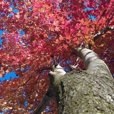 climb tree