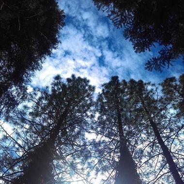 trees sky