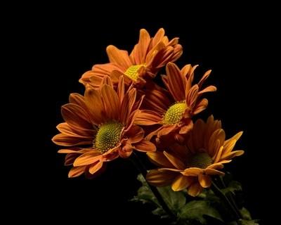 Floral Uprising 0420