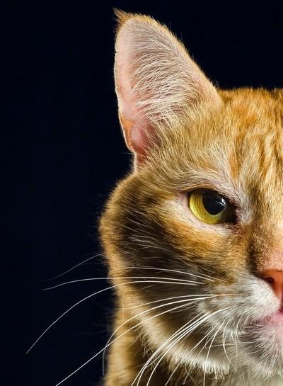 Cat's Serious Half