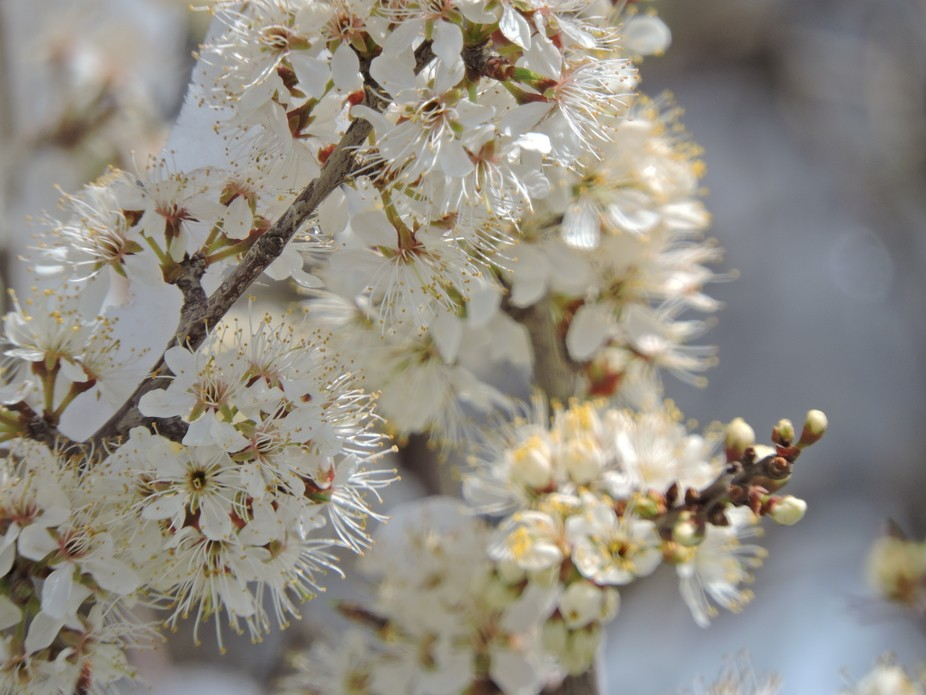 Spring is here, but mother nature is giving us a bit more winter..  seems to me, the blooms weren...
