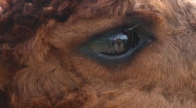 Tess's Eye