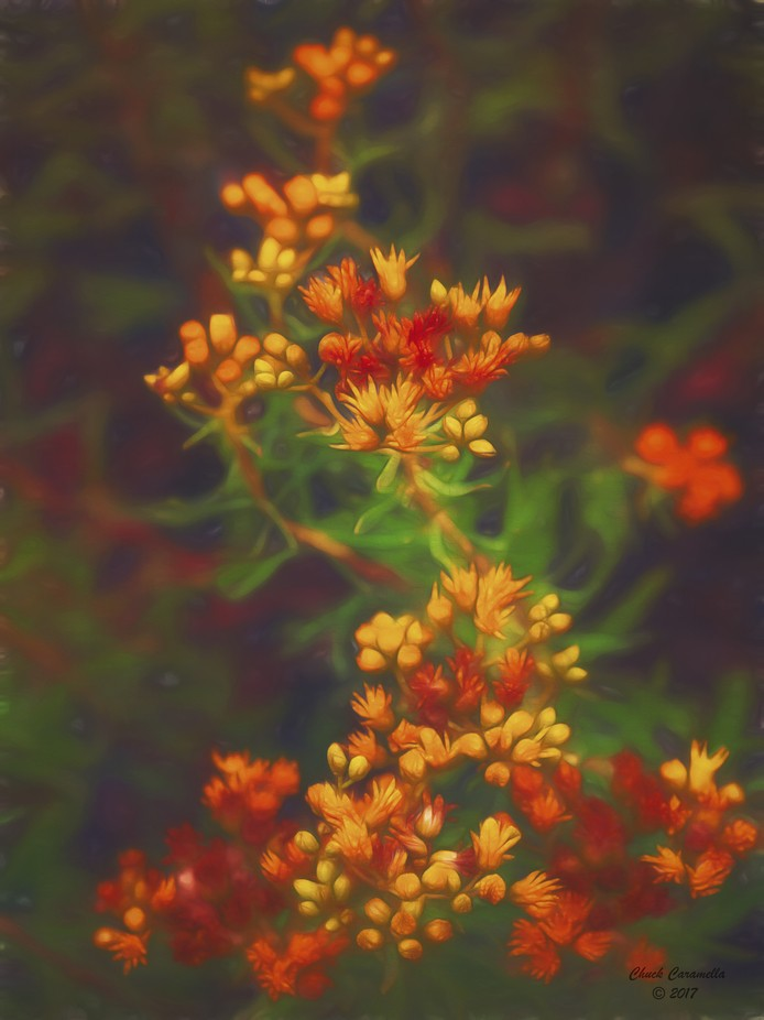 Photography - Digital Manipulation/Painting.  Roadside flowers found somewhere in Northern Arizona.