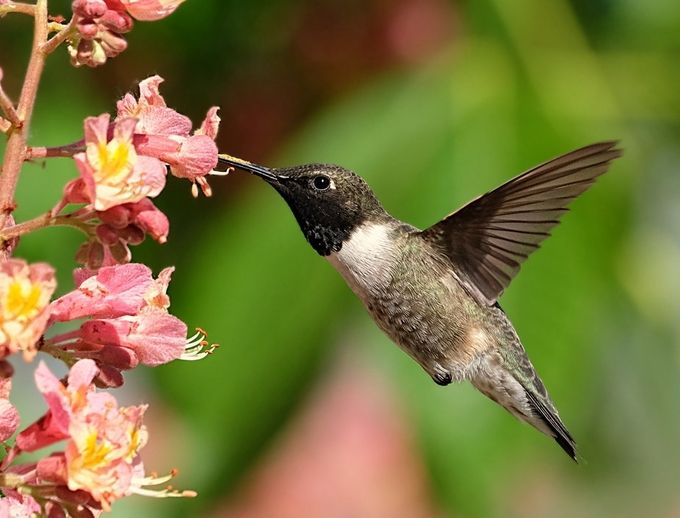Hummer by Shawn_Thomas - Hummingbirds Photo Contest