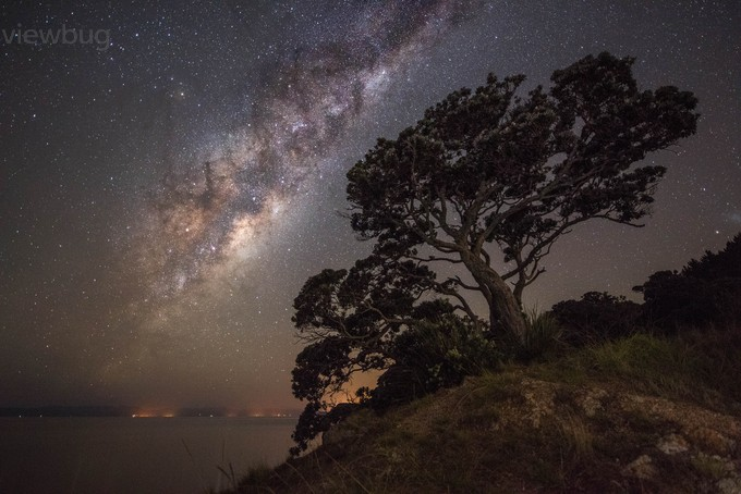 The Twinkle Tree by Mil8ant - The Milky Way Photo Contest