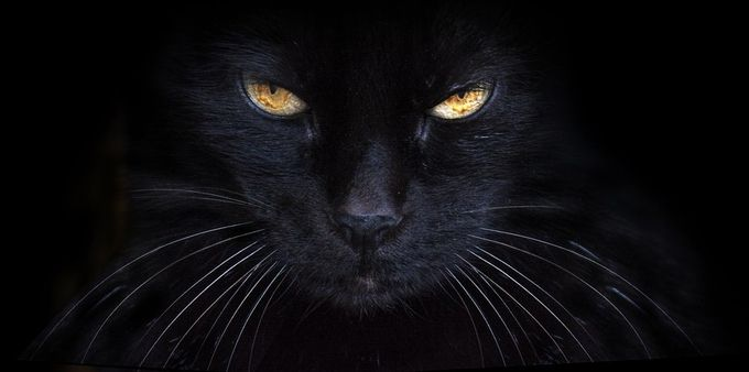 black cat 2 by Arnau_Bolet - Feline Beauty Photo Contest