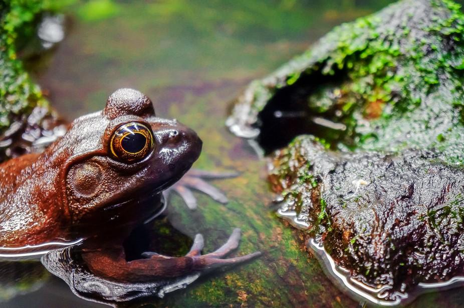Frog at the Vancouver Aquarium. Look at that eye…